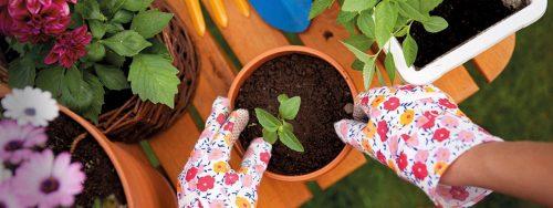 plantation de plantes en pot
