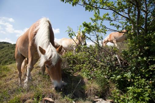 ardeche-chevaux