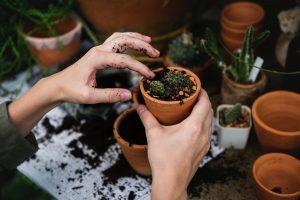 Quelles plantes cultiver à Lyon et comment s'en occuper?